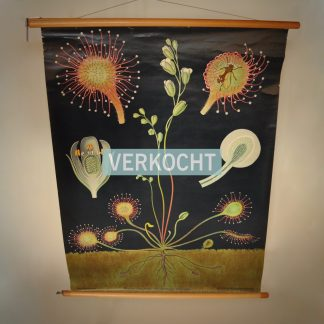 Vintage schoolplaat Ronde Zonnedauw Jung Koch Quentell