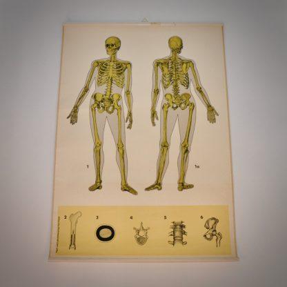 Stoere brocante schoolplaat van het skelet